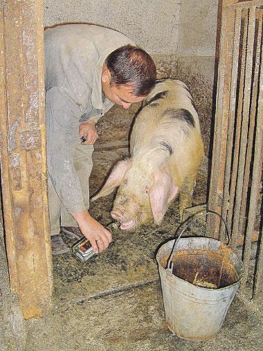 для как спасти пылающих свиней еще аромат может