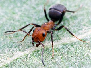 ...гигантских муравьев и заработал на этом 390 миллионов долларов.