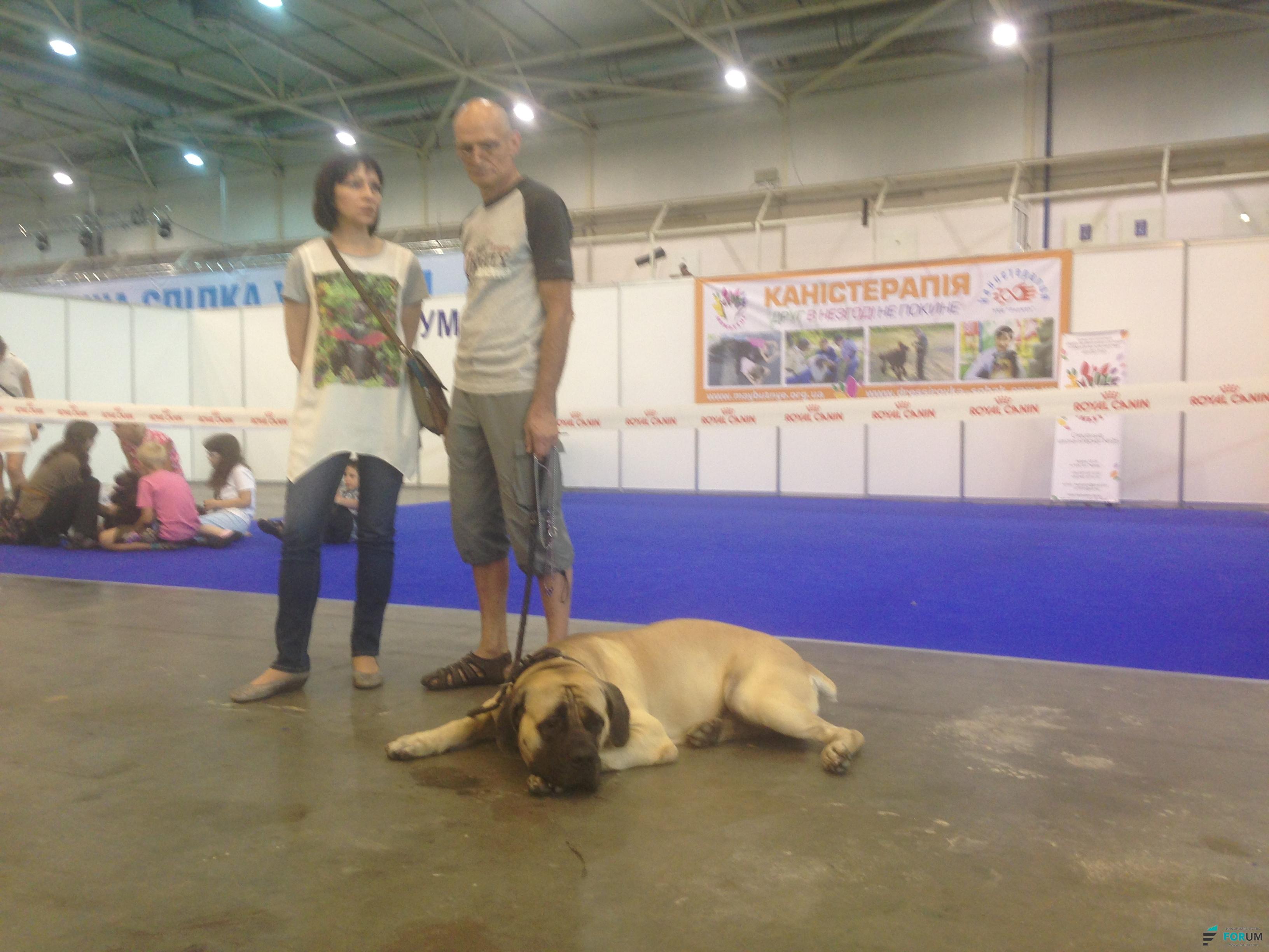 Международная выставка собак в Киеве
