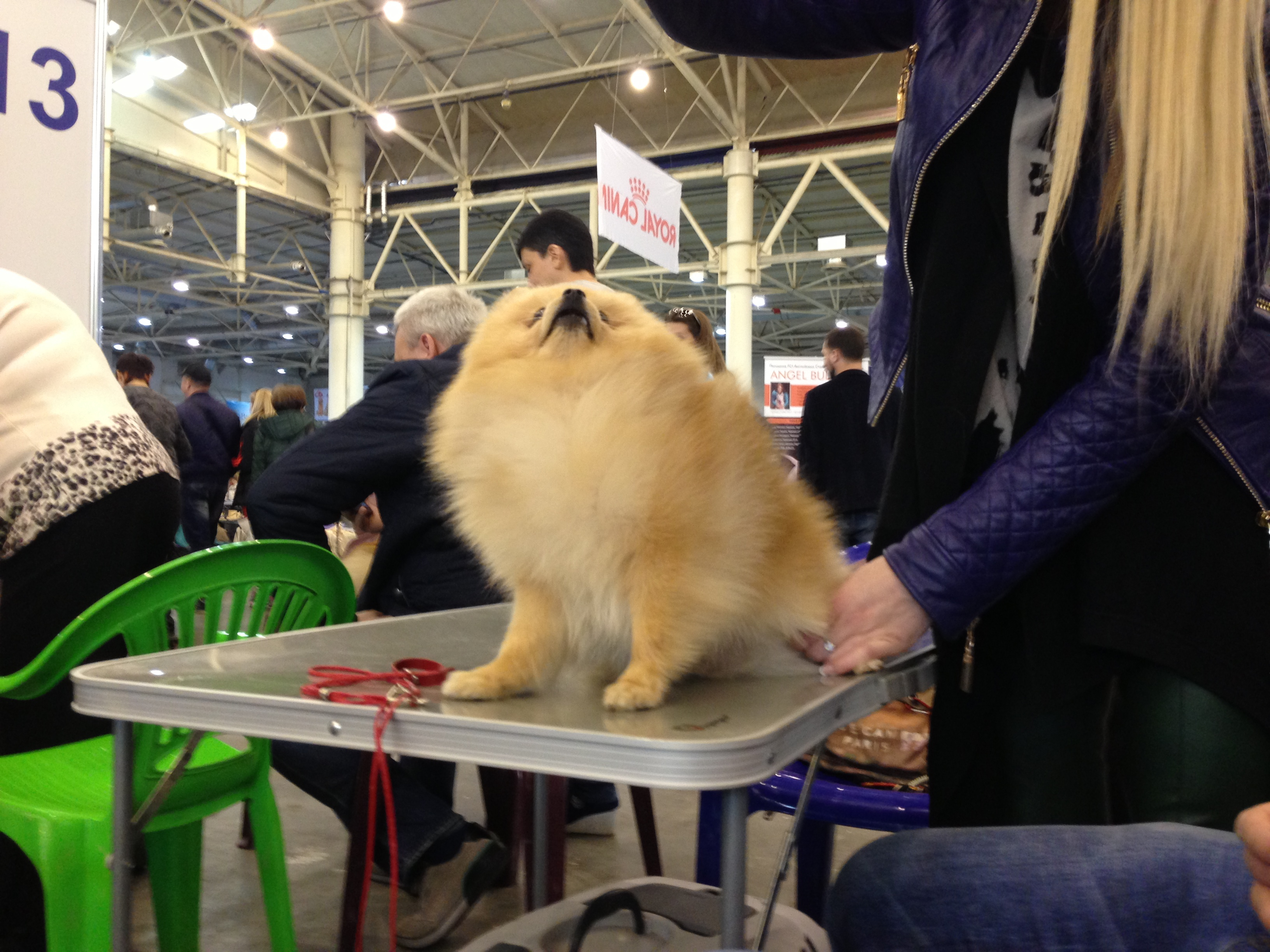 Міжнародні виставки собак усіх порід