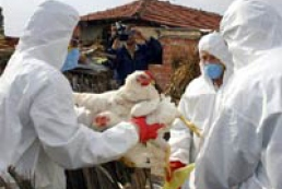 Bird flu outbreak in Crimea