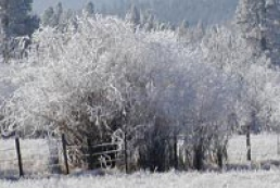 Frost made dead 329 settlements of Ukraine