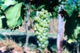 Moldova boosts wine export to Ukraine