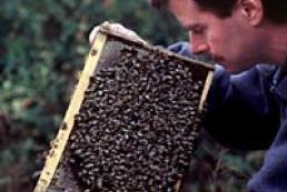 Beekeeping Trade Fair to be held in Kyiv