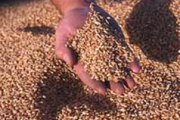Ukraine to export approximately 12 million of grain