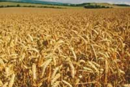 Ukraine was rejected licences for wheat export