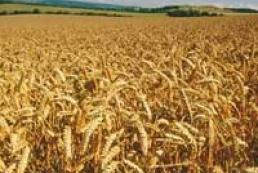 Ukrainian grain market staying frozen