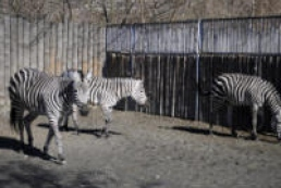 Kyiv Zoo states campaign underway for its closure for sake of territory