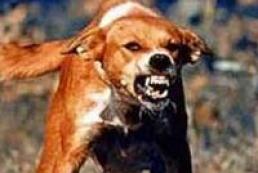 Number of rabies cases growing in Zaporizhzhya region