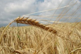 Ukrainian farmers are urged not sell grain for trifling sum