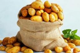 Ukrainians to harvest more than 20 million tons of potatoes
