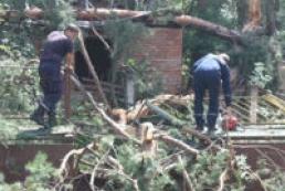 Heavy wind beats down 2 thousand trees in Donetsk region
