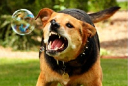Veterinary Service: Level of rabies increased ten-fold