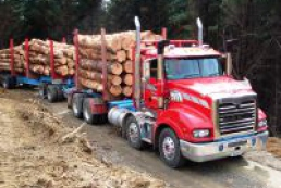 Contributions from forestry to state budget to be increased