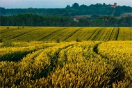 Japanese to teach Ukrainians to use land resources