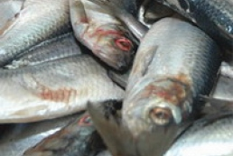 Ukraine to increase Norwegian seafood purchase