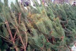 State Forest Service names price for Christmas trees