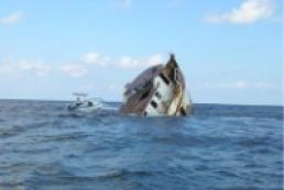 Dead body of a Ukrainian sailor found on the Turkey coast