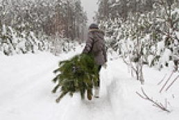 Christmas trees for sale: legal status vs. illegal logging