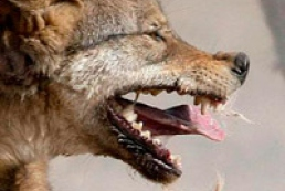 State Veterinary and Phytosanitary Service spends half its budget on rabies