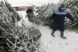 Police seize over 100 thousand fir trees from poachers