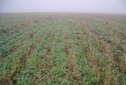 PM: Condition of 91% of winter crops estimated as good