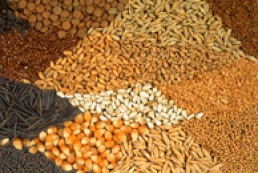 67 thousand tons of seeds imported in Ukraine last year