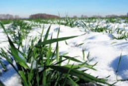 Agriculture Ministry: 91.5% of winter crops are in good condition