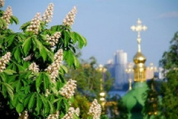 Chestnuts in Khreshchatyk to be planted till the end of April
