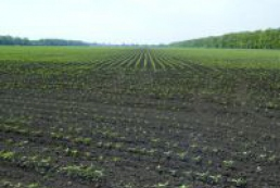 Sowing of early spring crops completes in Crimea