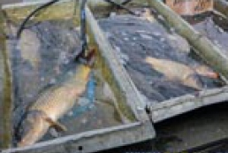 Sweep of Kyiv markets, or Fishing in due time