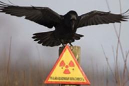 Ukraine has fake Chornobyl veterans, Yanukovych admits