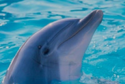 Ecologists demand ban domestic dolphins export