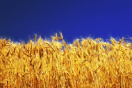 Ukrainian farmers already threshed 300 thousand tons of grain