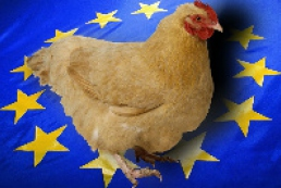 Ukraine to supply at least 50 thousand tons of chicken to EU this year