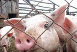 Ukraine, Russia, Belarus to fight against African swine fever