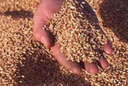 Demand and price for Ukrainian grain is stable
