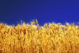 Ukraine increases grain exports by 16%