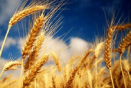 Weather forecasters worry about condition of winter crops