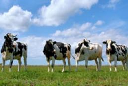 Ukraine's livestock population reaches 5.2 million heads