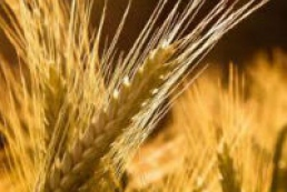Ministry of Agrarian Policy and Food defends tax breaks in agricultural sector