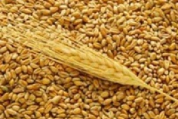 Grain export rate remains unchanged