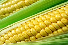 Ukraine to increase corn crops