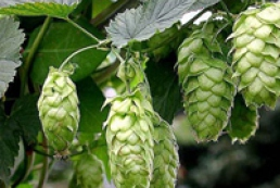 State support to fruit, grape and hop growing grew 7-fold