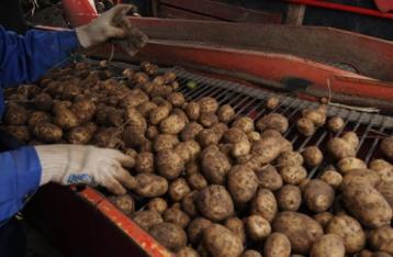 Білорусь слідом за РФ заборонила ввезення української картоплі