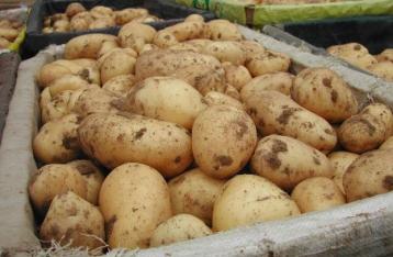 Беларусь сняла ограничения на поставки украинского картофеля