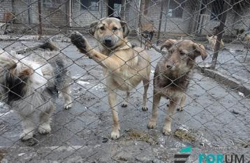 Зона АТО: на межі загибелі опинилися тисячі покинутих домашніх тварин
