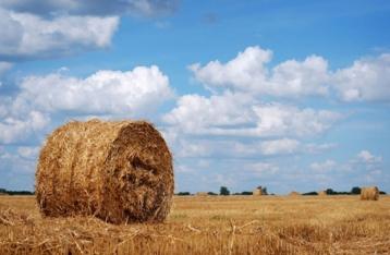 З програми діяльності Кабміну виключено пункт про ринок землі