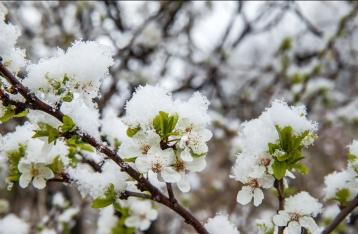 Кульбида: На Пасху в Украине будет холодно