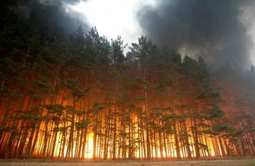 Фактор «Ч»: угрожают ли Украине масштабные лесные пожары?
